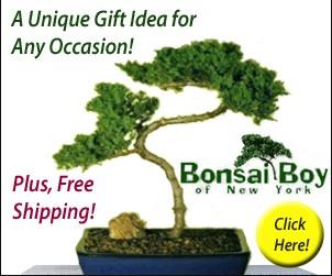 Bonsai Boy Coupon Code Free Shipping