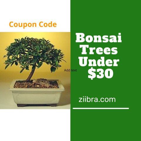 how much does a bonsai tree cost